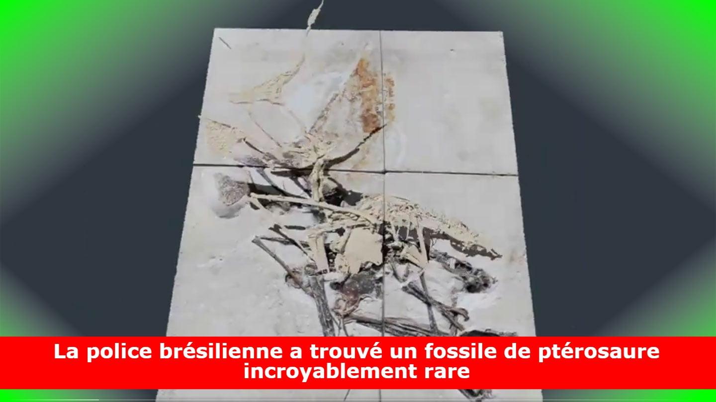 La police brésilienne a trouvé un fossile de ptérosaure incroyablement rare